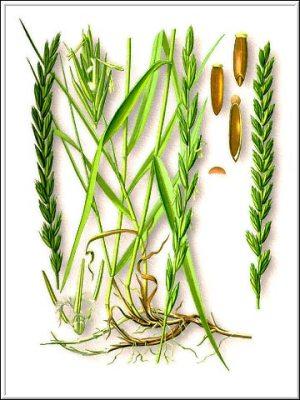 Лечение бесплодия народной медициной: травы
