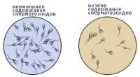 перелинковка олигоспермия