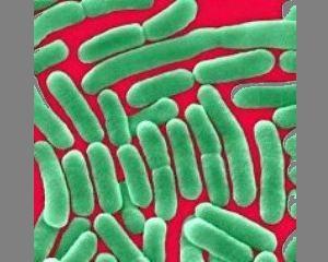Инфекции (статья об орхите)