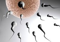 Лечение аспермии народными средствами: какие методы существуют?