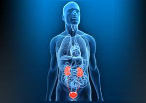 Урология — раздел о болезнях