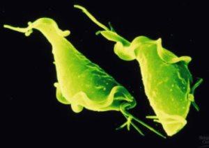 Трихомониаз — чем опасно данное заболевание