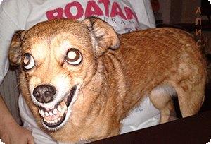 Агрессивные домашние животные могут способствовать получению травм полового члена
