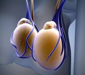 Внутренние мужчские половые органы яички содержутся внутри наружного органа — мошонки